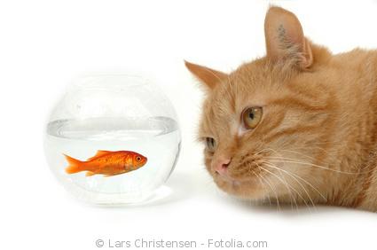 Katze kennenlernen